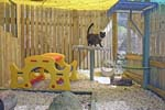 cat in playgym